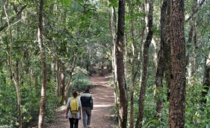 jungle walk chitwan