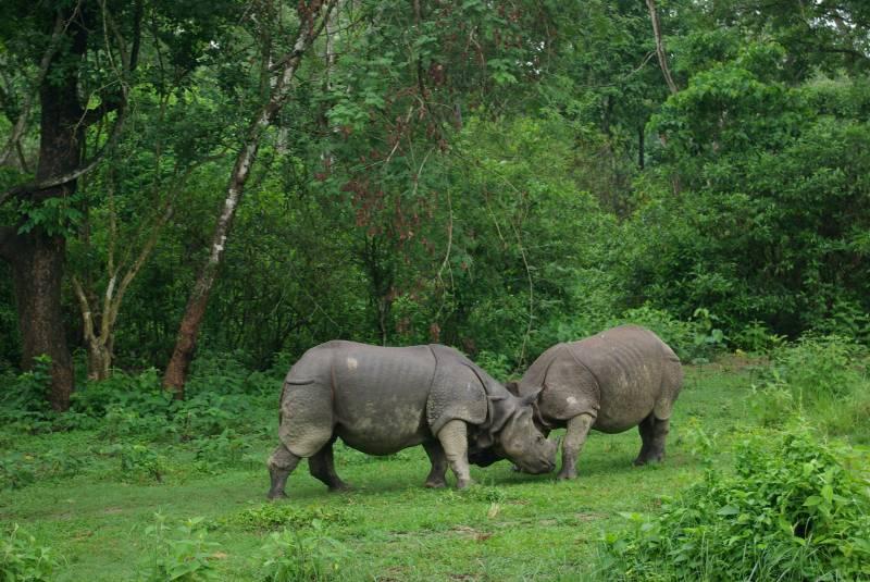 jungle safari chitwan