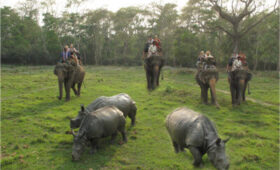 Welcome to Chitwan Jungle Safari