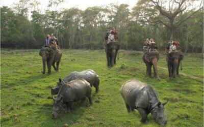 Welcome to Chitwan Jungle Safari