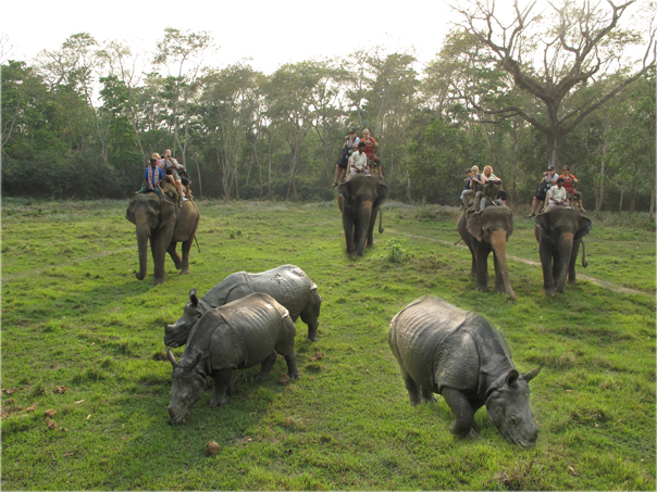 chitwan-elephant-jungle-safari_01