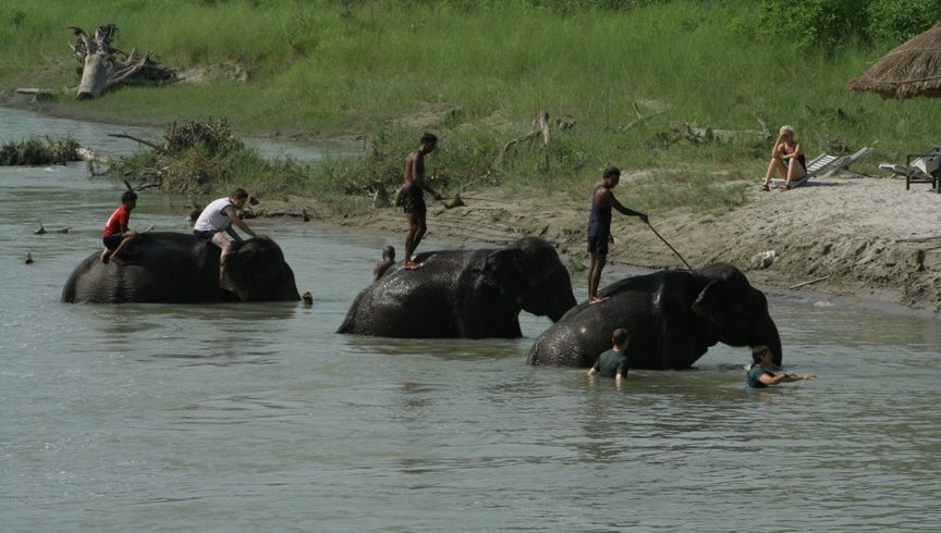 chitwan-jungle-safari02-864×490