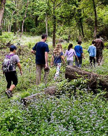 Jungle / Nature Walk